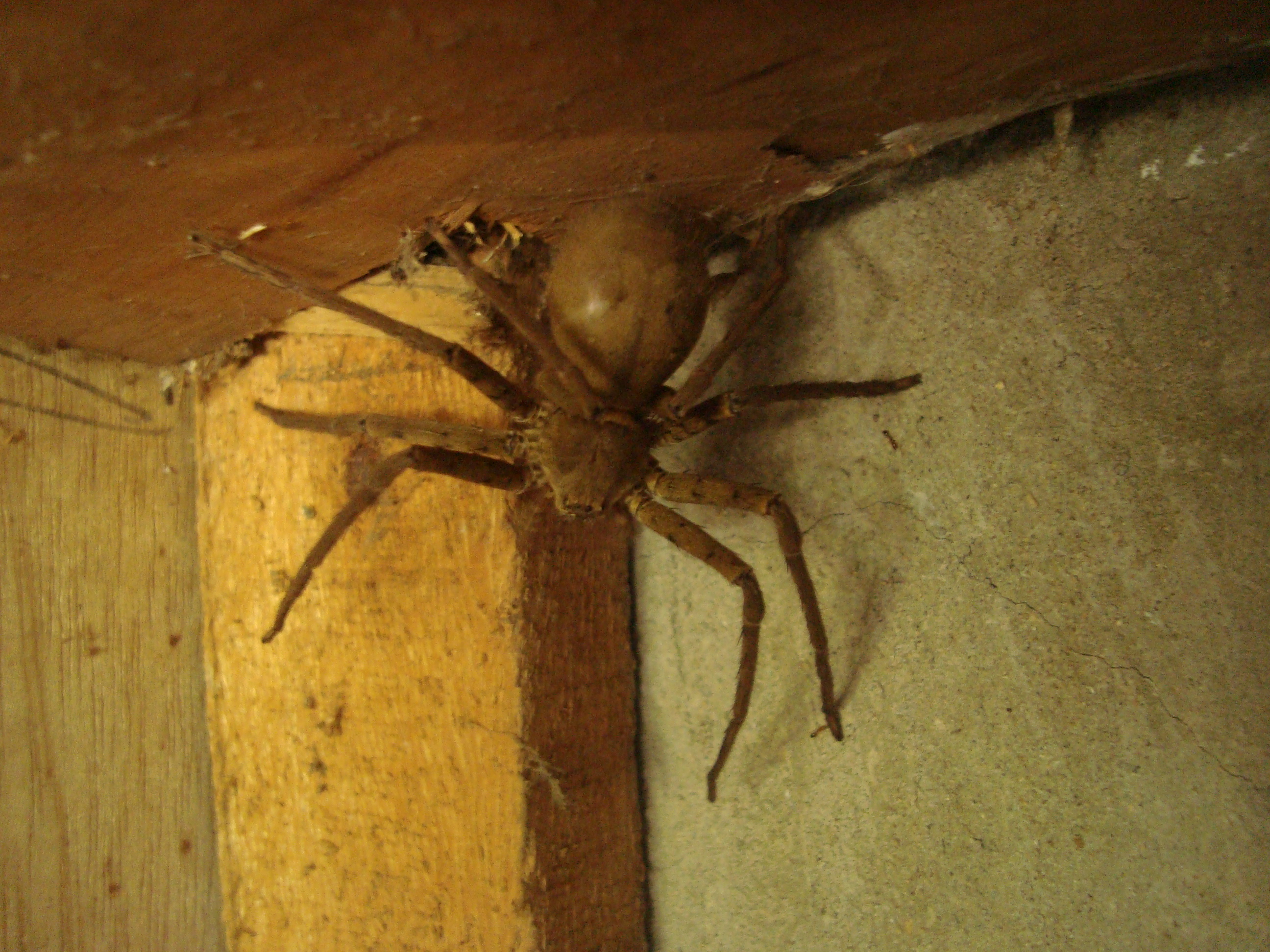 Spider infestation in house for How to stop spiders coming in your home